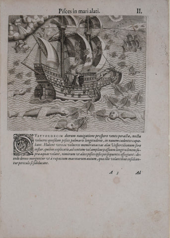 Theodore de Bry (1528-1598), after John White (c. 1540-1593), Pifces in mari alati. II