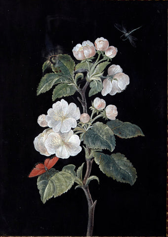 Barbara Regina Dietzsch (German, 1706-1783), Apple Blossom with Butterfly, Caterpillar, and Dragonfly
