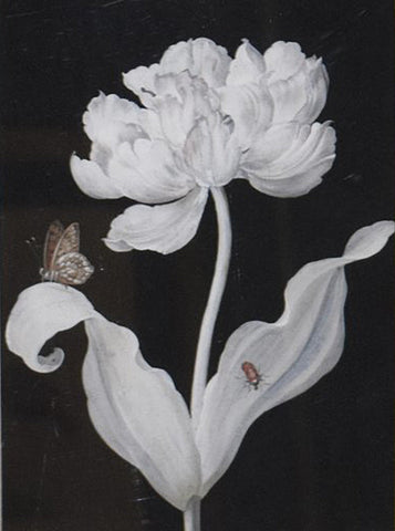 Barbara Regina Dietzsch (German, 1706-1783), Peony with Bug and Butterfly