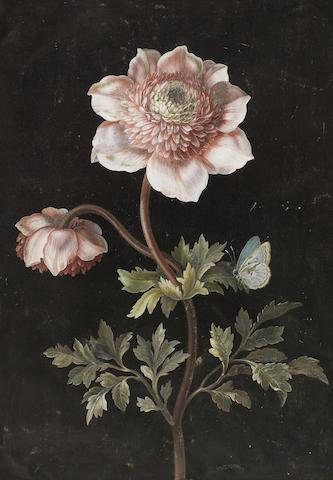 Barbara Regina Dietzsch (German, 1706-1783), Anemones and a Large Blue Butterfly (Phengaris arion)
