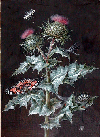 Barbara Regina Dietzsch (German, 1706-1783), A Study of a Thistle
