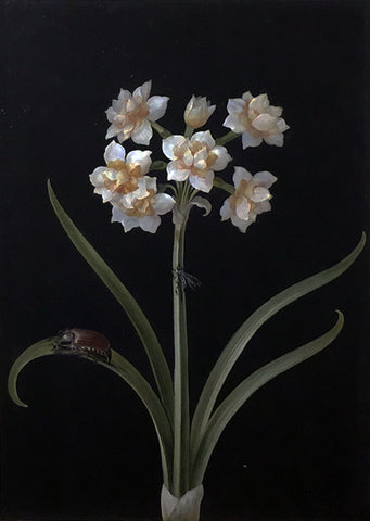 Barbara Regina Dietzsch (German, 1706-1783), White Narcissus with Beetle and Fly