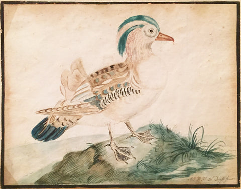 A.J.W.H. de Dopff (Dutch. fl. 18th-century), A Mandarin Duck
