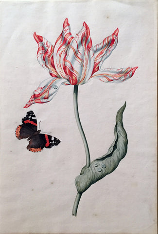 Dutch School (17TH CENTURY), Tulip with Red Admiral Butterfly