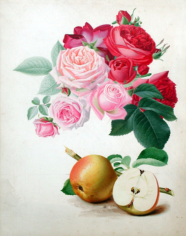 Walter Hood Fitch (British, 1817-1892), A Study of Roses and Apples