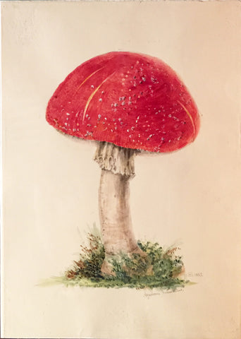 Edward Forster, the Younger (British, 1765-1849), Agaricus Musinius