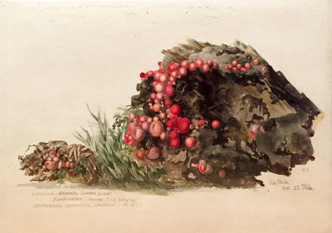Edward Forster, the Younger (British, 1765-1849), Lycogala Miniata ..Old Park