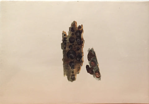 Edward Forster, the Younger (British, 1765-1849), [Mycological Study on Bark]