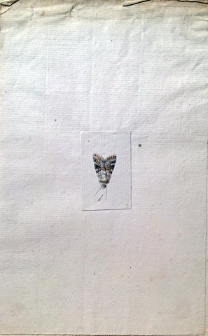 Christophe Paulin de la Poix de Fremenville (1747-1848), Untitled [Small Moth]