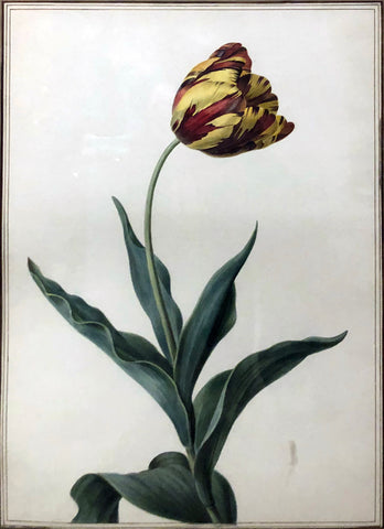 French School, Tulip Study