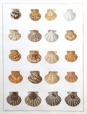 Jean Gautier (French, 19th-century) Shell Study I