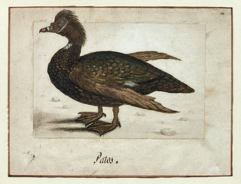German School (17TH-CENTURY), Patos [Brown and Green Duck]