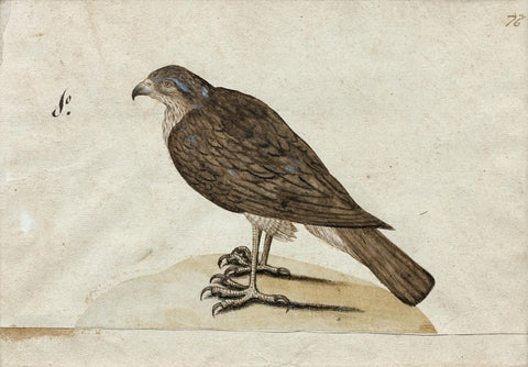 German School (17TH-CENTURY), [Raptor]