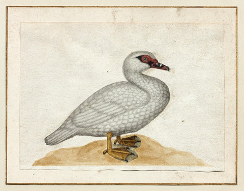 German School (17TH-CENTURY), [White Duck]