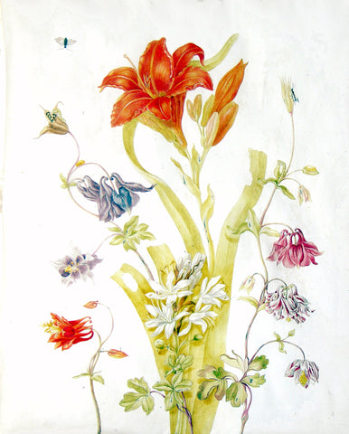 Johanna Helena Graffe (German, 1668-1723), Study of a lily, a columbine and other flowers