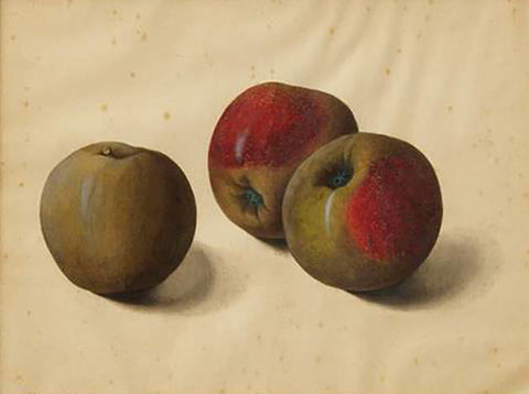 Attributed to Franz Xaver Gruber (Austrian, 1801-1862), Apples