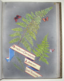Ellen Harding (British 1809-1893), Fern Album Containing, A Few of the Rarest, Commonest, and Prettiest, of the British and Foreign Ferns