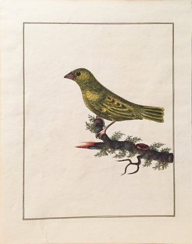 Charles Hayes (British, 1772-1826), Greenfinch