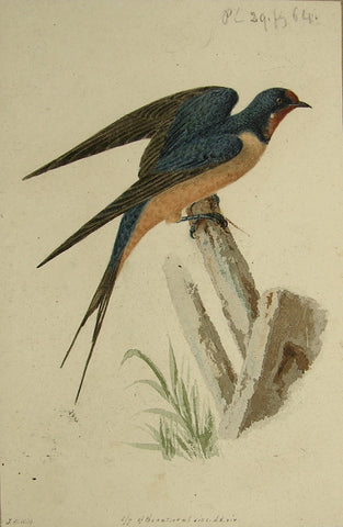"John William Hill (American, 1812-1879), ""The Barn Swallow"""