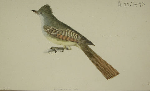 "John William Hill (American, 1812-1879), ""The Great-crested Kingbird"""