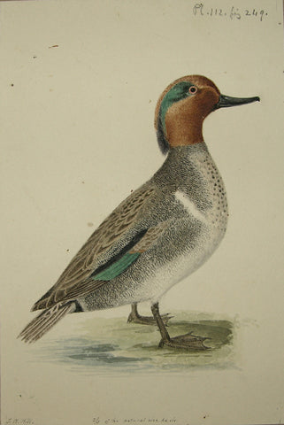 "John William Hill (American, 1812-1879), ""The Green-winged Teal"""