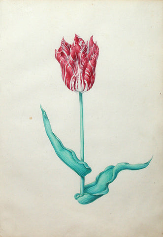 Pieter Holsteyn The Younger (Dutch, 1614-1687), Tulip Study 9