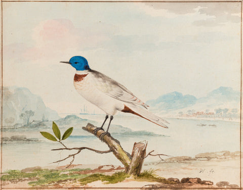 Pieter Holsteyn (Dutch, 1614 - 1673) and Aert Schouman (Dutch, 1710-1792), A Blue Headed Tern in an Estuary Landscape