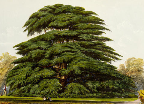 Edward James Ravenscroft (1816-1890), The Pinetum Britannicum. A Descriptive Account of Hardy Coniferous Trees Cultivated in Great Britain