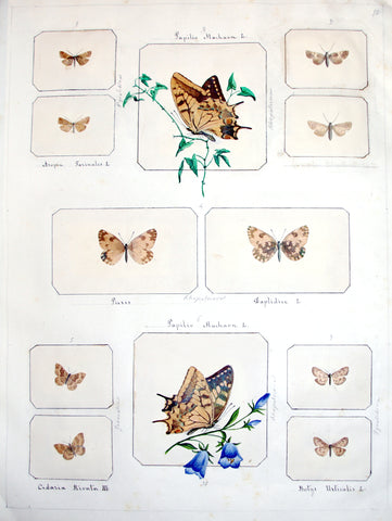 ITALIAN BUTTERFLY AND INSECT COLLECTION. A Collection of 4 albums of Entomological Specimens assembled by an Italian Amateur.