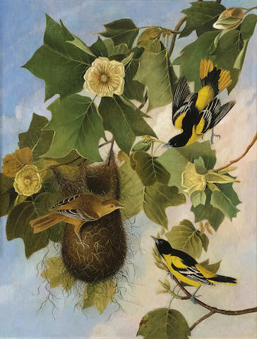 "Joseph Bartholemew Kidd (1808-1889),  after John James Audubon, ""The Baltimore Oriole"""