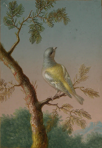 Ernst Friedrich Carl Lang, (German, 1748-1782), A Male Common Chaffinch