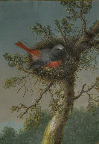 Ernst Friedrich Carl Lang, (German, 1748-1782), A Male Common Redstart With Nest