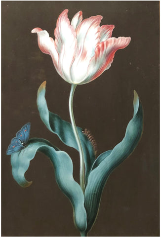 Ernst Friedrich Carl Lang (german, 1748-1782), Blue-eyed tulip and caterpillar