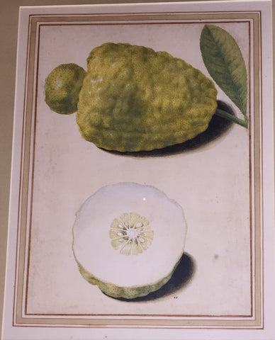 Vincenzo Leonardi (Italian, fl.1621-1646), Citron, Citrus medica L.:whole and half - fruit with an apical pellet