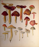 Commandant Julien Lignier (1872-1932), Albums of Fine Original Watercolors of Fungi.