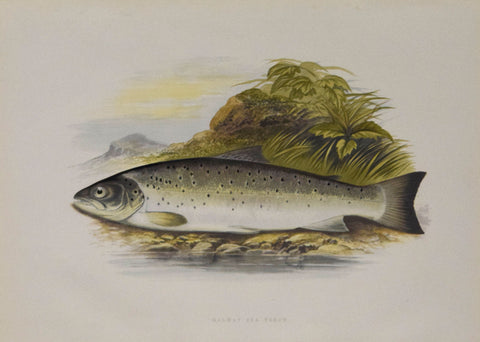Alexander Francis Lydon (1836-1917), artist, Galway Sea Trout