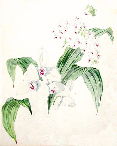 James Laird MacFarlane (British, 1836-1913), Orchid Study (2)