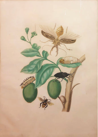 Maria Sibylla Merian (German, 1647-1717), Plate 48. Tabrouba Tree with Stag Beetle, Palm Weevil and other Insects
