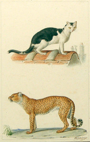 Jean - Baptiste Meunier (French, 1786-1858) Domestic Cat and Cheetah [Paris Rooftop]
