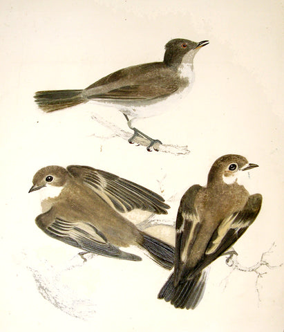 "ATTRIBUTED TO ROBERT MITFORD (BRITISH, 1781-1870), ""Three Brown Birds on Two Branches"""