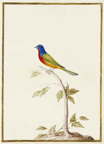Nicolas Robert (French, 1614-1685, Painted Bunting On A Branch [Passerin nonpareil sur une branche (Passerina Ciris)]