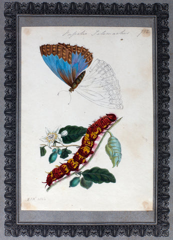 Richard Polydore Nodder (British, fl. 1793–1820) A Collection of Entomological Drawings