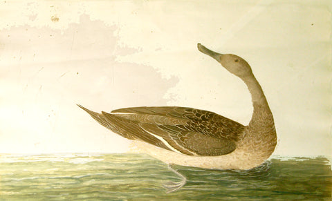 Peter Paillou (British, c.1720-1790), [Duck]