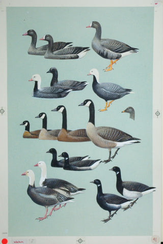 Roger Tory Peterson (1908-1996), Geese, Brant