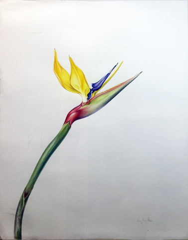 Jenny Phillips (b. 1949), Bird of Paradise