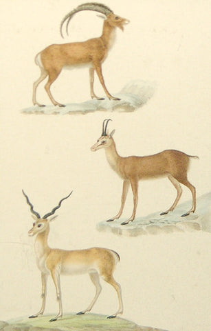 Jean-Gabriel Pretre (French, Fl. 1824-1840) Gazelle and Antelope