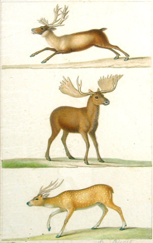 Jean Louis Prévost (French, circa 1760-1810) Reindeer, Moose and Deer Study
