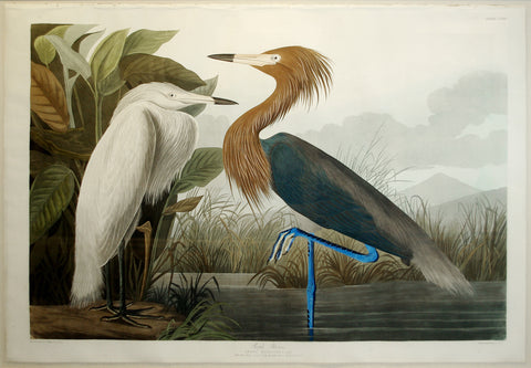 JOHN JAMES AUDUBON (1785-1851), Purple Heron, PL. CCLVI