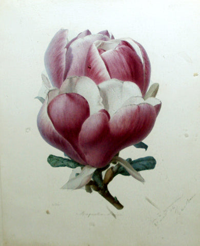 Alfred Riocreux (French, 1820-1912), Magnolia Lenné
