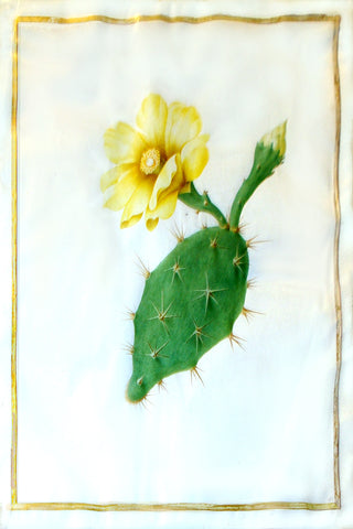 Nicolas Robert (French, 1614-1685), Untitled (Paddle cactus with a yellow bloom)